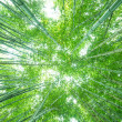 The flourish bamboo forest — Stock Photo