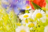 Summer flowers — Stock Photo