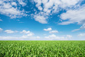 Meadow under a blue sky — Stock Photo