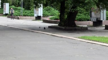 RUSSIA, OREL - 31 MAY 2014: One man is running and another man is riding bicycle in the park — Stock Video