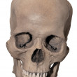 Smiling Human Skull — Stock Photo