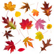 Fall Leaf Collection — Stock Photo