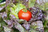 Garten frische Tomaten — Stockfoto