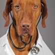 Doctor dog — Stock Photo #13409102
