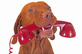 Dog with red phone — Stock Photo