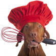 Stock Photo: Dog chef with egg beater