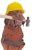 Handyman dog — Stock Photo