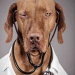 Winking doctor dog — Stock Photo #19634833
