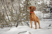 Attentive dog outdoors — Stock Photo