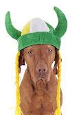 Pies irlandzki wojownika — Zdjęcie stockowe