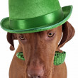 Dog with green hat — Stock Photo #22481049