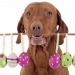 Dog with Easter eggs — Stock Photo