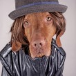 Dressed up dog — Stockfoto
