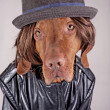 Dressed up dog — Stock Photo