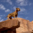 Dog on the top of the cliff — Stock Photo #35525513