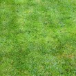 Beautiful green lawns - Stock Photo