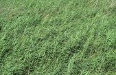 Wetland with wavy reeds — Stock Photo
