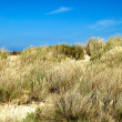 Stock Photo: Landscape of a beach with dunes