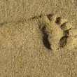 Photo of a lonely footprint - Zdjęcie stockowe