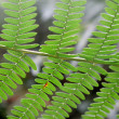 Wallpaper with green fern branches - Stock Photo