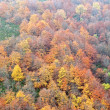Forest in autumn — Stock Photo