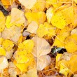 Yellow leaves in autumn wallpaper - Stock Photo