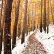 Beautiful snowy forest — Stock Photo #15635731