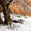 Beautiful snowy forest — Stock Photo