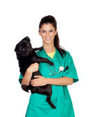 Brunette vet with a pug dog — Stock Photo