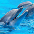 Three beautiful and funny dolphins — 图库照片