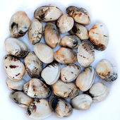 Delicious clams prepared for cooking — Stock Photo