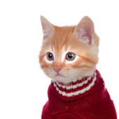 Beautiful red-haired kitten wearing a wool sweater — Stock Photo