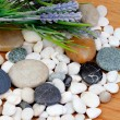 Stock Photo: River rocks with lavender flowers