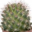 Thorny cactus plant isolated — Stock Photo #41677897