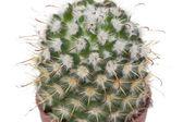 Many specimen of cactus, — Stock Photo