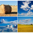 Collage of photos of meadow and sky in summer — Stock Photo #47934631