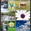 Beautiful spring landscape collage — Stock Photo #47935031