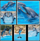 Collage of photos of dolphins in a show — Stock Photo
