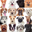 Collage with many dogs — Stock Photo #49053545