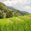 Rice Terraces in Sapa — Stock Photo