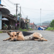 Dog on Road — Stock Photo #12078409