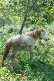 Horse under the Tree — Stock Photo