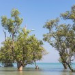 Trees on East Railay Beach — Stock Photo