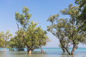 Trees on East Railay Beach — Zdjęcie stockowe