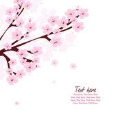 Sakura blossom on tree, cherry flower blossom isolated on white, spring floral card — Stock Vector