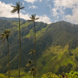 Vax palm trees of Cocora Valley, colombia — Stock Photo #17148981