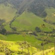 Vax palm trees of Cocora Valley, colombia — Stock Photo #17149165