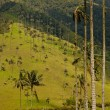 Vax palm trees of Cocora Valley, colombia — Stock Photo #17149395