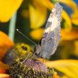 Close-up of butterfly sitting on a flower — ストック写真