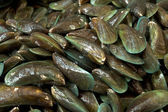 Fishmarket - mussels — Stock Photo